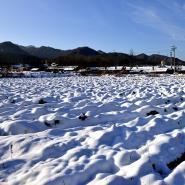 秦岭火车站内外的雪色